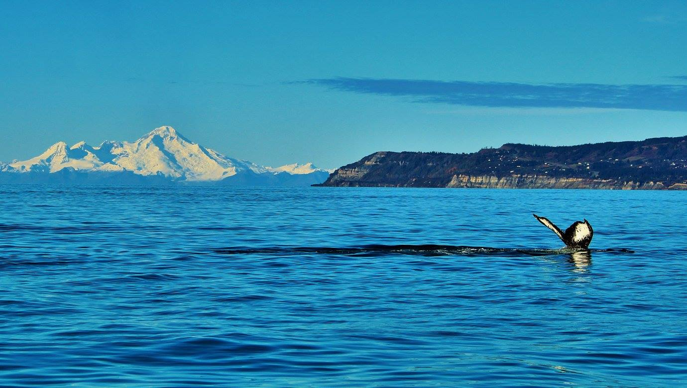 whale tail coming out of water with mountains in background
