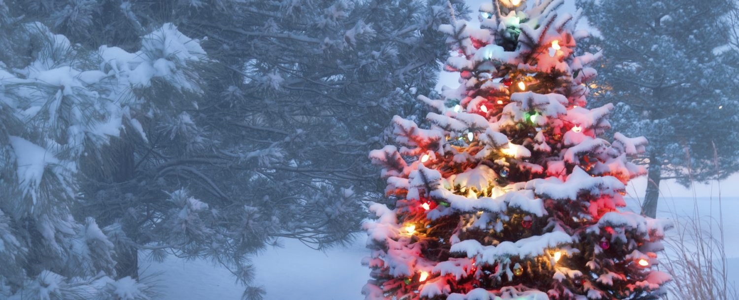 This Tree Glows Brightly On Snow Covered Foggy Christmas Morning